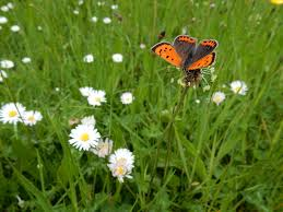 ecologisch bermbeheer spaart fauna en flora