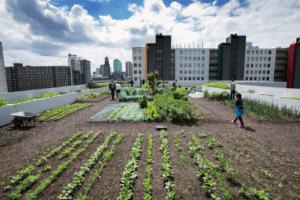 De Dakakker (foto Gemeente Rotterdam aangelegd door Binder Groenprojecten)