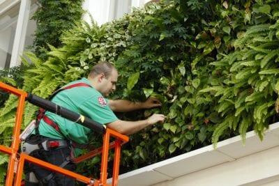 Veilig werken op hoogte Certificaat Groene gevels