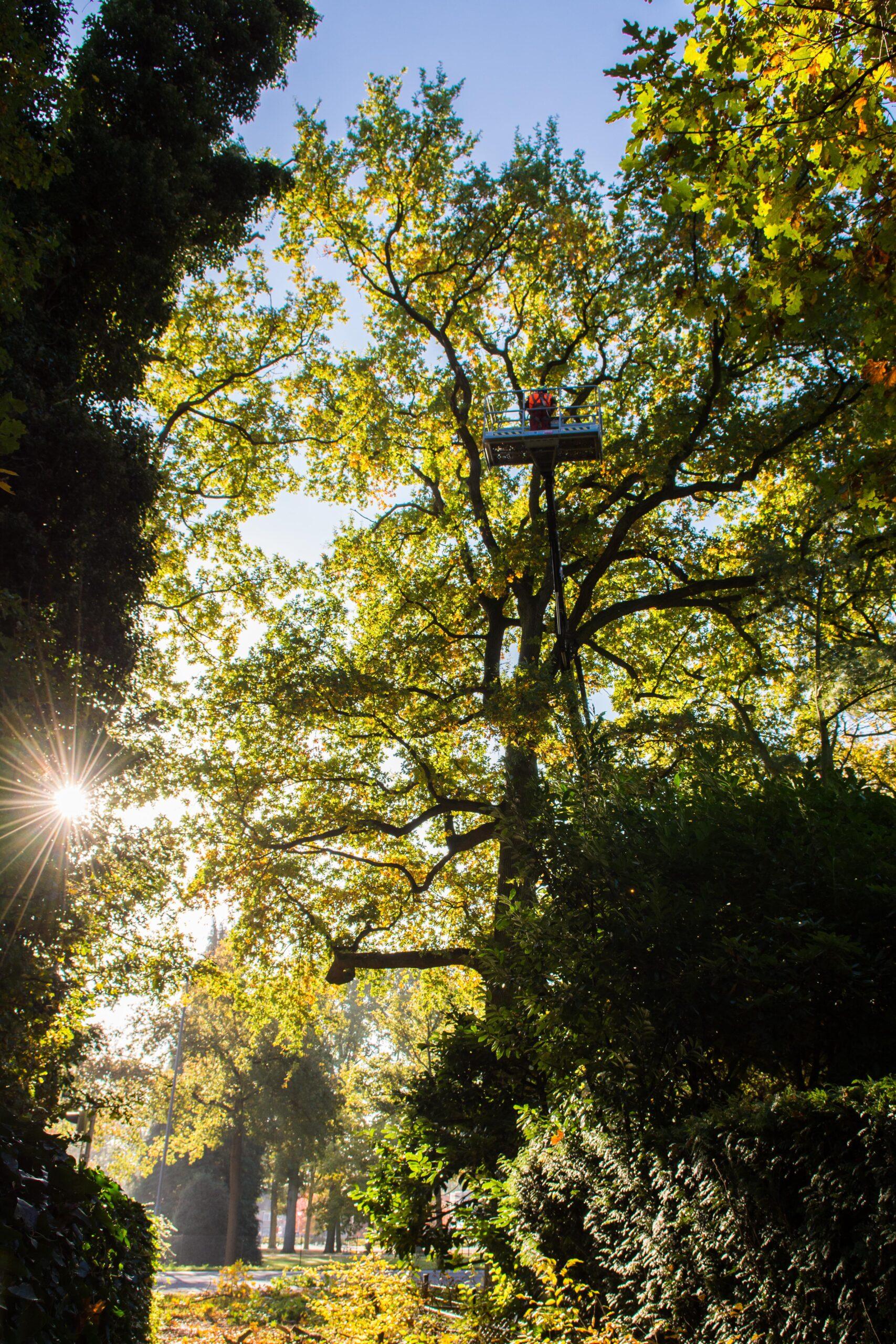 Ondersteunende werkzaamheden boomverzorging toegelicht
